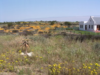 Flower Season Langebaan Accommodation
